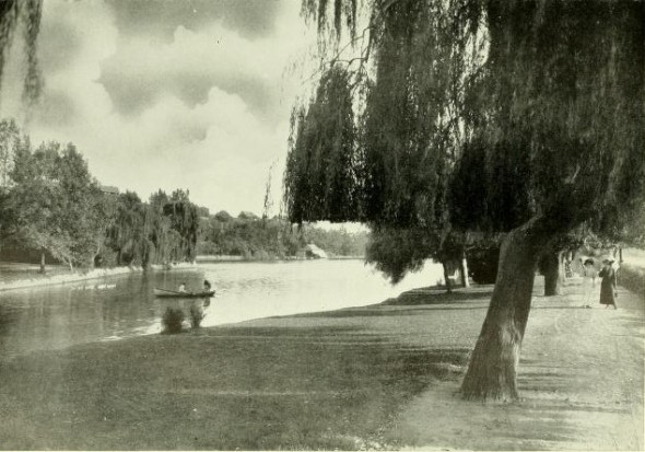 Weeping Willow, Echo Park