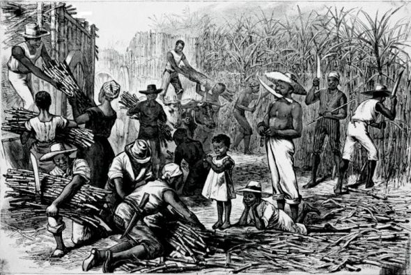 Slaves harvesting sugar cane.