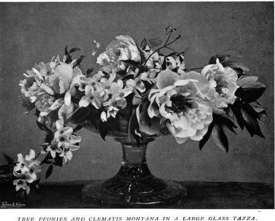 Tree Peonies and Clematis Montana in a Large Glass Tazza