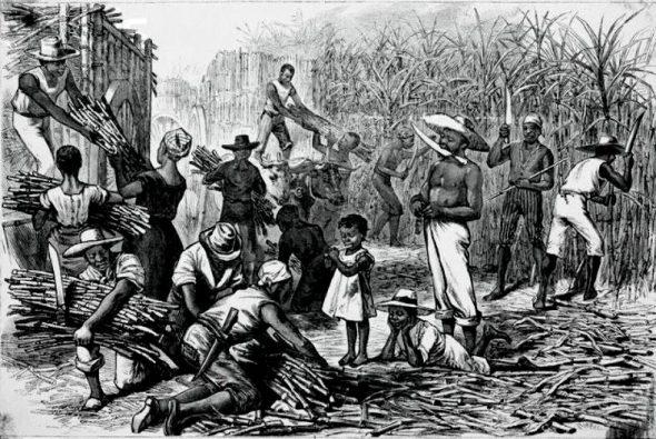Slaves harvesting sugar cane.